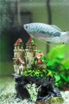 Несколько способов, как поймать рыбку в большом аквариуме