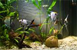 Как новичку выбрать аквариумных рыбок