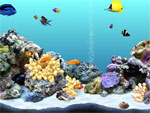 Выбор декоративного фона в аквариуме