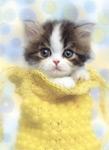 Ветеринар для вашего котенка