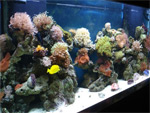 Выбор грунта в аквариум