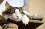 Это чудо природы – кошка… и наше к ней отношение