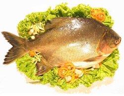 Почему полезно есть рыбу: 5 преимуществ для здоровья
