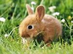 Карликовые и декоративные кролики как домашние питомцы