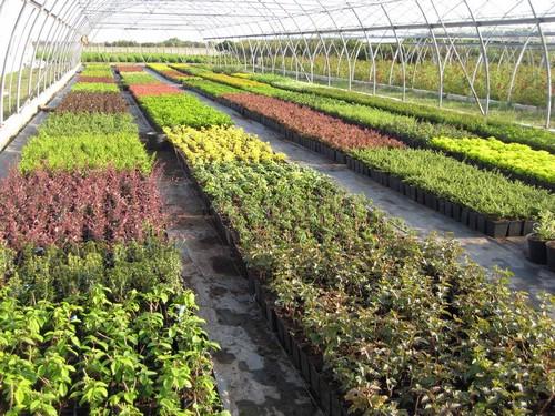Питомники растений
