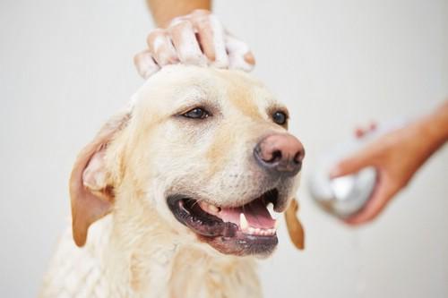Шампуни от блох для собак
