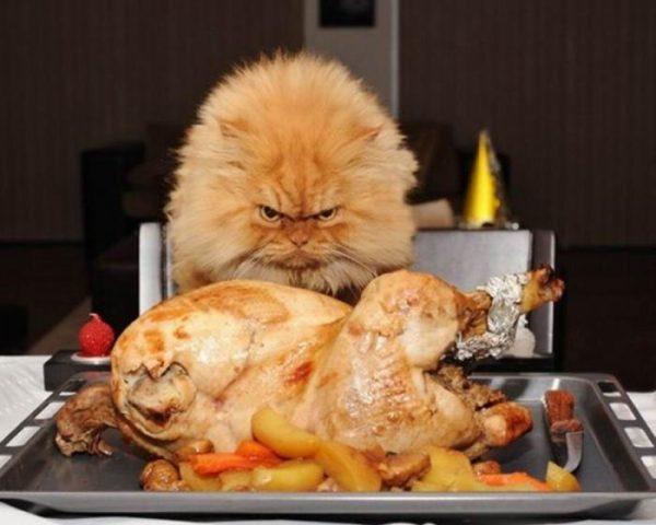 Противопоказания в еде кошкам