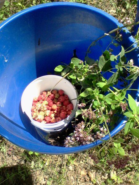 Охота за ягодами объявляется открытой