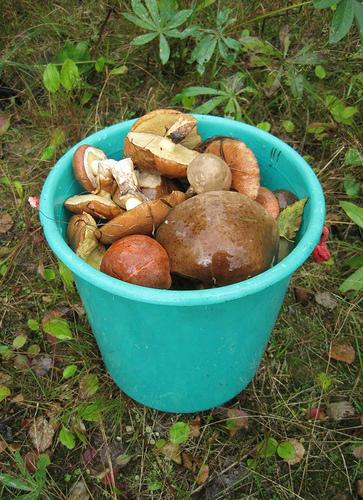 Охота за грибами объявляется открытой