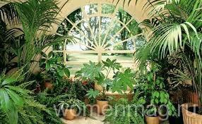 Красивые растения дома
