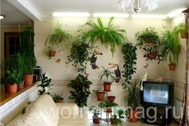 Красивые растения дома — легко!
