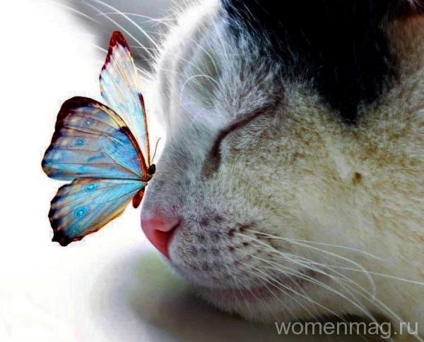 Бабочка на носу у кота