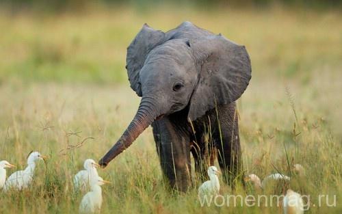 Как улучшить настроение? Смотрите видео про слонят