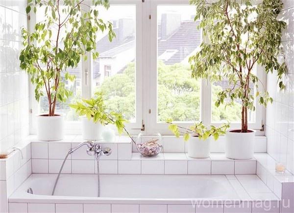 В моде растения в ванной комнате