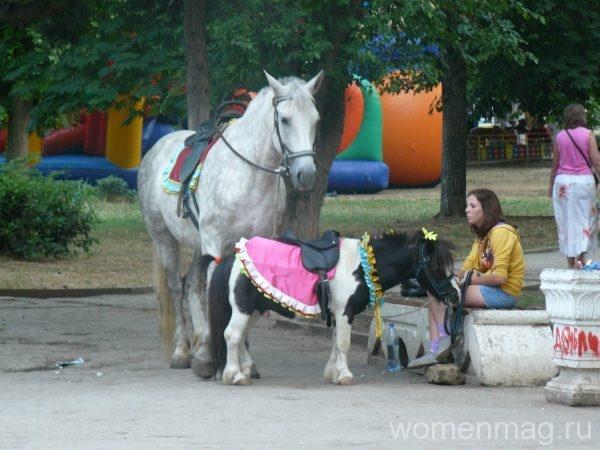 Конные прогулки в парке Победы в Севастополе