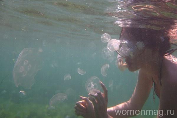 Осторожно: медузы