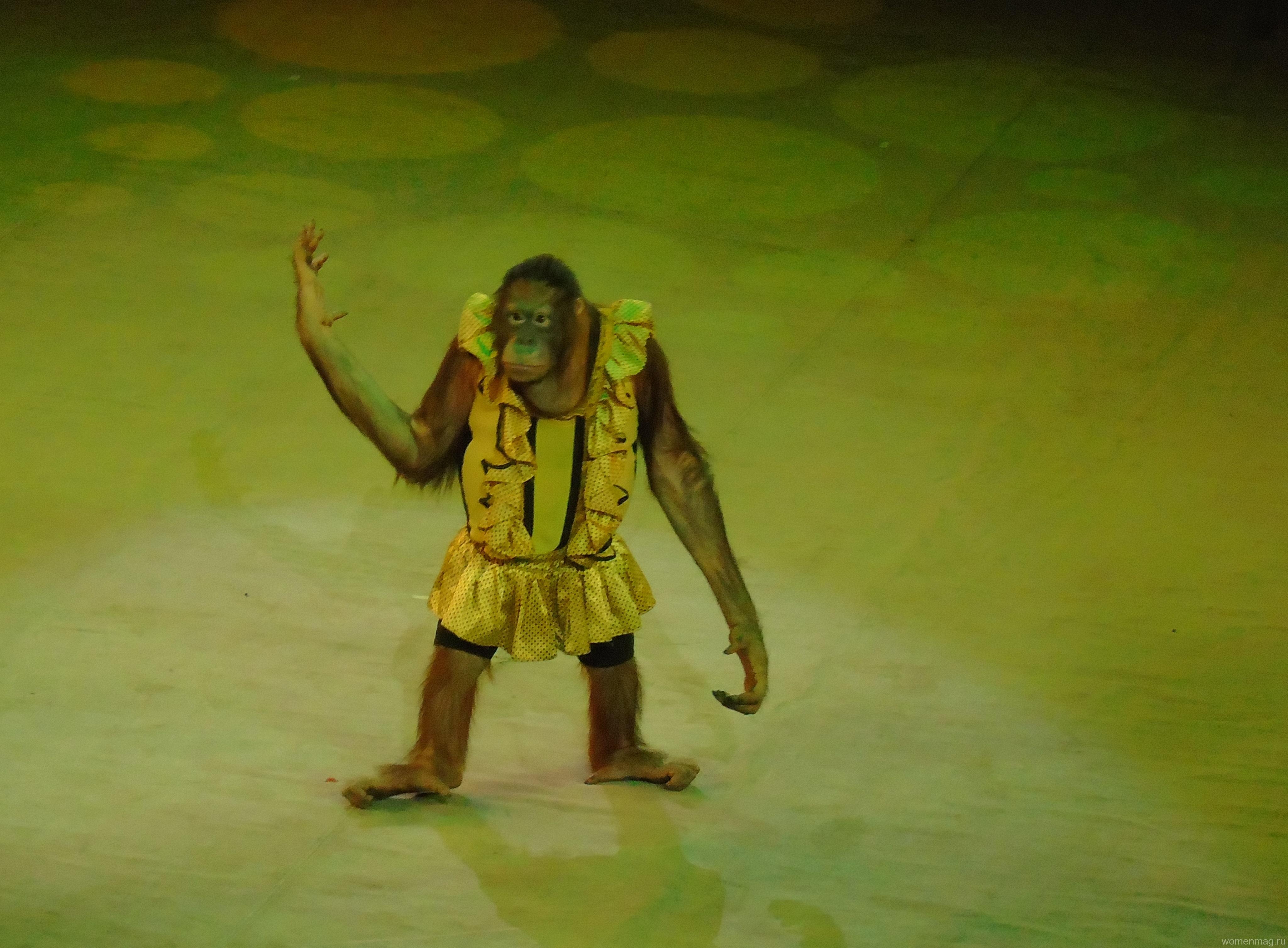 Гастроли «Циркъ № 1» в Хабаровске. Отзыв