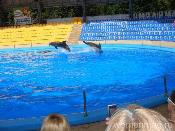 Дельфинарий «Немо» в Харькове