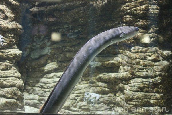 Севастопольский аквариум: угорь