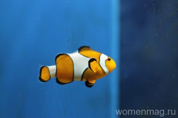 Севастопольский аквариум: рыба-клоун