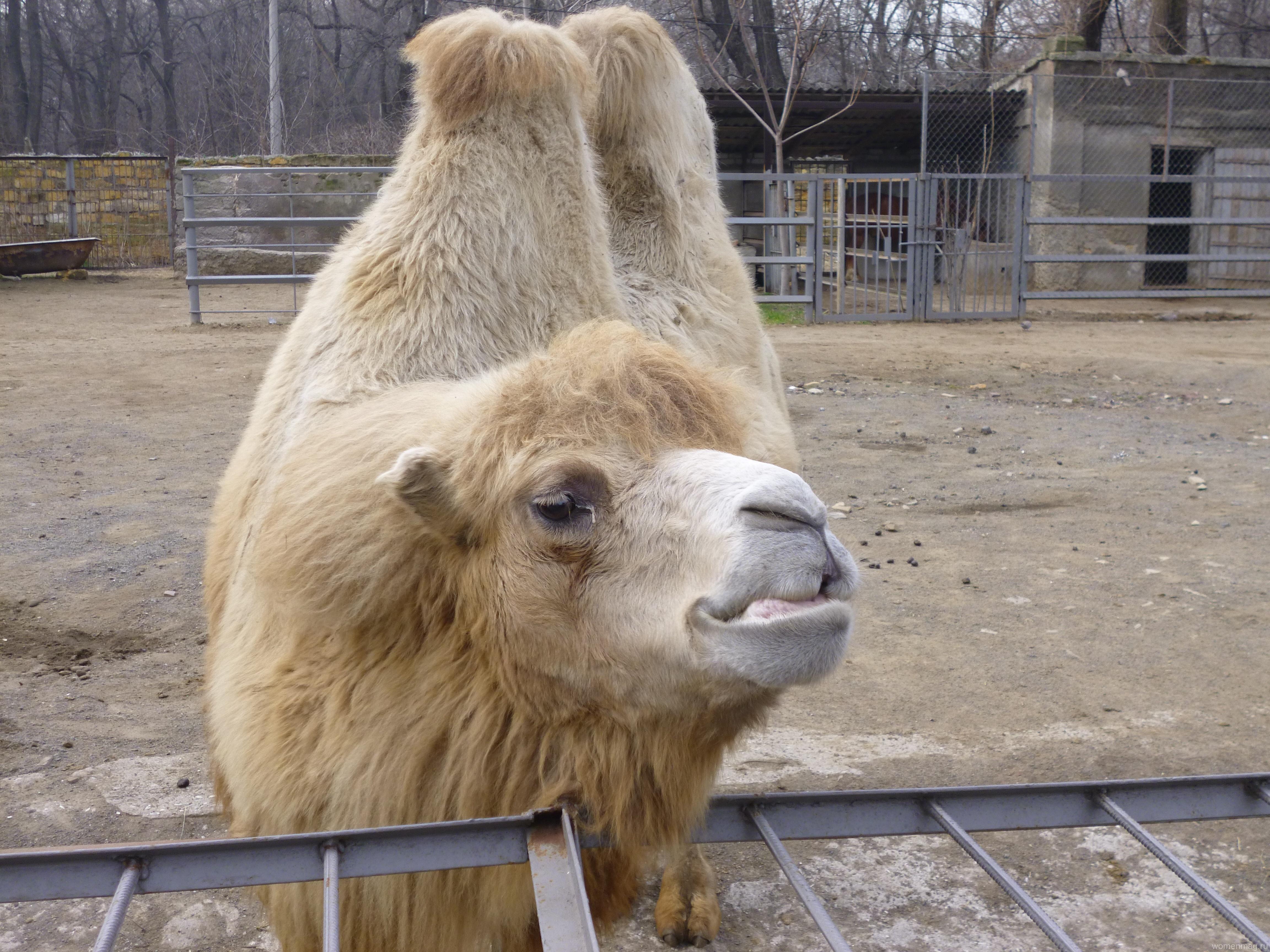 Одесский зоопарк дарит эмоции всем и каждому!