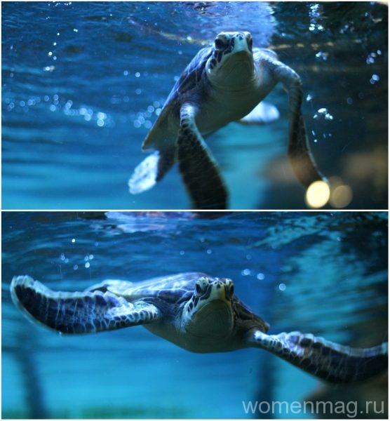 Севастопольский аквариум: черепаха