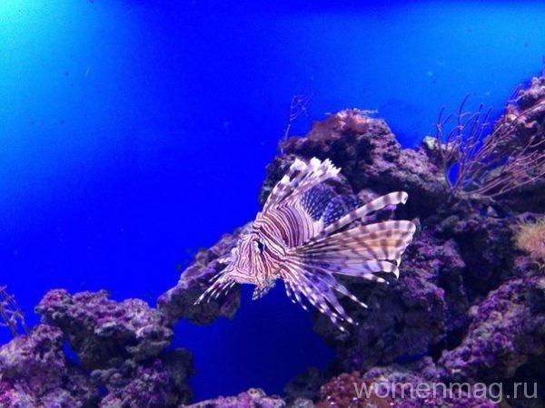 Океанариум Москвариум на ВДНХ