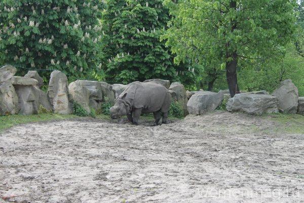 Зоопарк в Варшаве