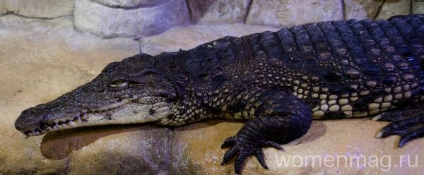 Крокодиляриум в Ялте