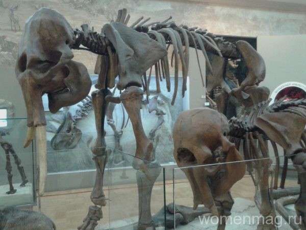 Музей естественной истории Республики Татарстан