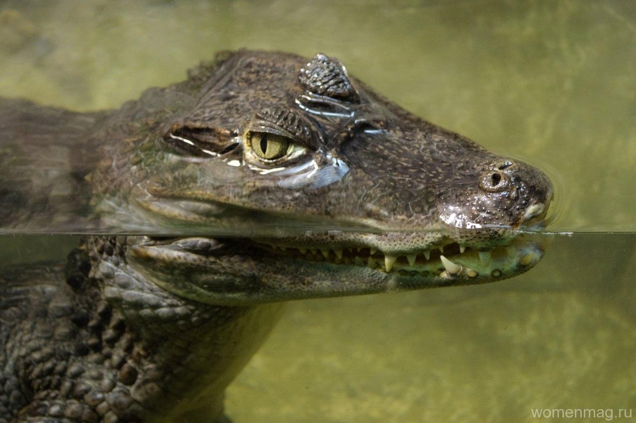 Ялта. Крокодиляриум