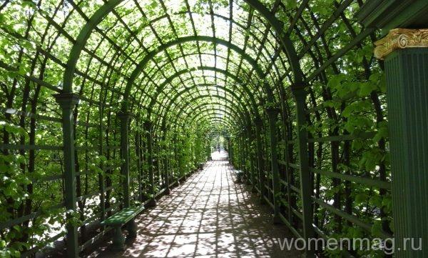 Зеленые туннели