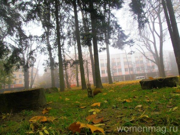 Парк во Львове